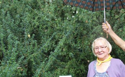 Pol stoletja kasneje je Slavka Jerman znova videla brezo